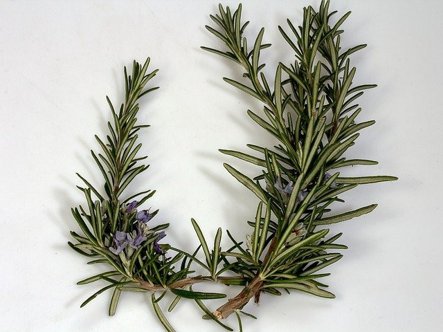 Rosemary Promotes Hair Growth