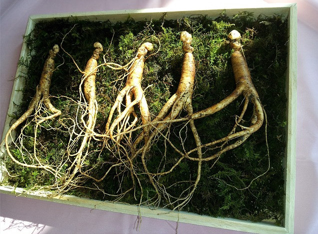 Ginseng Boosts Hair Growth
