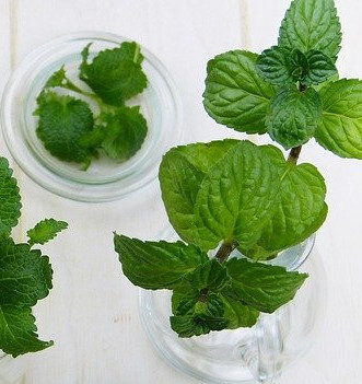 Peppermint Helps to Grow Hair Faster